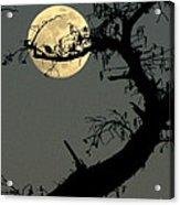 Cypress Moon Acrylic Print by Joe Jake Pratt