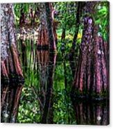 Cypress Secrets Acrylic Print