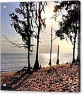 Cypress Shore Acrylic Print