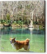 Cypress Spring Pup Acrylic Print by Bob Jackson