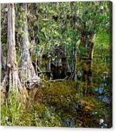 Cypress Trees 4021 Acrylic Print
