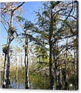 Cypress Swamp Acrylic Print by Rudy Umans