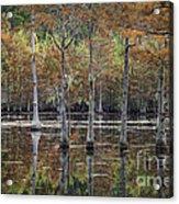 Cypress Tree Fall Reflections Acrylic Print
