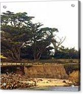 Cypress Trees On 17 Mile Drive Acrylic Print