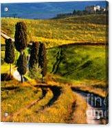 Cypresses Of Toscany Acrylic Print