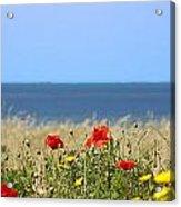 Cyprus Poppies Acrylic Print