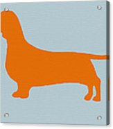 Dachshund Orange Acrylic Print