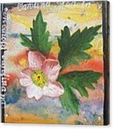 Texas Wildflowers Tp X Acrylic Print
