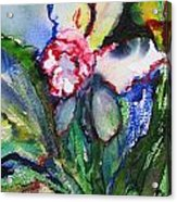 Daffodil 6 Acrylic Print