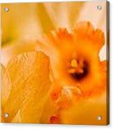 Daffodil Bouquet Acrylic Print by John Holloway