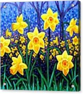 Daffodil Dance Acrylic Print