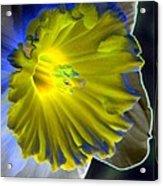 Daffodil Dreams - Photopower 1907 Acrylic Print