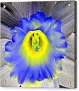 Daffodil Dreams - Photopower 1919 Acrylic Print