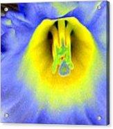 Daffodil Dreams - Photopower 1920 Acrylic Print