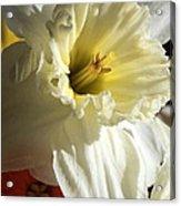 Daffodil Still Life Acrylic Print