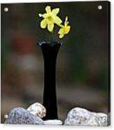 Daffodils In Black Amethyst 2 Acrylic Print
