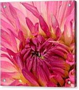 Dahlia 2am-104251 Acrylic Print
