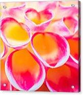 Dahlia Abstract Acrylic Print