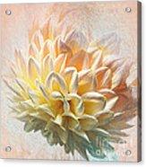 Dahlia Art Acrylic Print