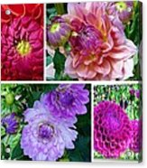 Dahlia Best Collage Acrylic Print