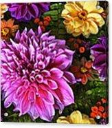 Dahlia Delight Acrylic Print