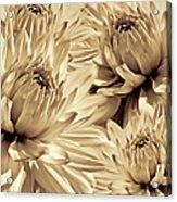 Dahlia Flowers Bouquet Sepia Acrylic Print
