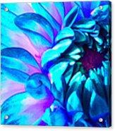 Dahlia In Pastel Acrylic Print by James Hammen