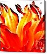 Dahlia On Fire Acrylic Print