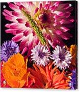 Dahlia Zinnia Bachelor's Buttons Flowers Acrylic Print