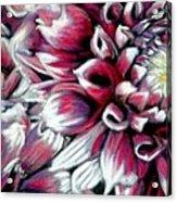 Dahlias In Pastel Acrylic Print