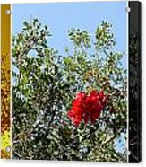Daily Cycle - Triptych Acrylic Print