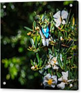 Daintree Monarch Butterfly Acrylic Print