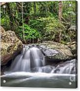 Daintree Rainforest Acrylic Print