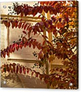 Dainty Branches - Warm Autumn Colors - Washington D C Facades Acrylic Print