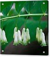 Dainty White Flowers Central Park Acrylic Print