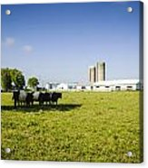 Dairy Farm Acrylic Print