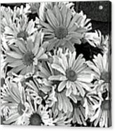 Daises In Black And White Acrylic Print