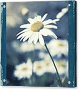 Daisies ... Again - 146a Acrylic Print