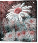 Daisies ... Again - P11ac2t1 Acrylic Print