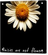 Daisies Are Not Flowers Fractal Version Acrylic Print