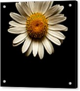 Daisies Are Not Flowers No Text Acrylic Print