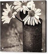 Daisies Can Acrylic Print