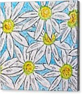 Daisies Daisies Acrylic Print