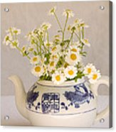 Daisies In A Teapot Acrylic Print