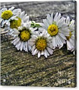 Daisies In Wreath Acrylic Print