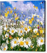 Daisies On A Hill - Impressionism Acrylic Print