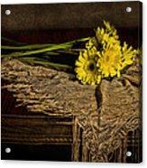 Daisies On The Table Acrylic Print