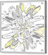 Daisies Three Acrylic Print
