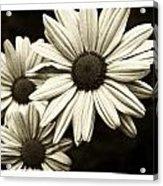 Daisy 2 Acrylic Print by Tanya Jacobson-Smith