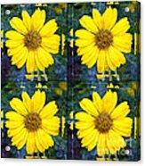 Daisy 8 Acrylic Print